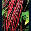 Bean, Yardlong / Asparagus: Chinese Red Noodle image