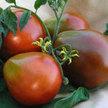 Tomato: Japanese Black Trifele image