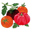 Tomato: Summer Feast Mix image