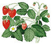 Strawberry: Mignonette image