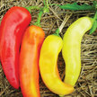 Peppers: Sweet Banana (Long Sweet Hungarian) image