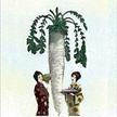 Radish: Japanese Minowase image