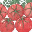 Tomato: Siberia image