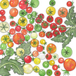 Tomato: Rainbow Mix image