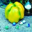 Peppers: Quadrato D'Asti Giallo image