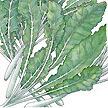 Turnip: Seven Top image
