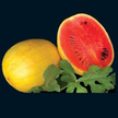 Watermelon: Golden Midget image