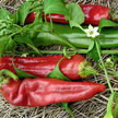 Peppers: Numex Big Jim image