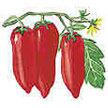 Tomato: Pompeii image