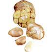 Garlic: Mexican Purple image
