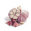 Garlic: Purple Glazer image