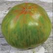 Tomato: Berkeley Tie-Dye image