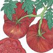 Tomato: Black From Tula image