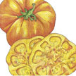 Tomato: Old German image