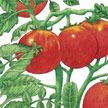 Tomato: Gardener's Delight image