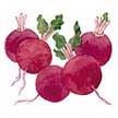 Beet & Beetroot: Baby Ball image