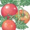 Tomato: Porter Improved image