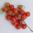 Tomato: Tess Land Race Currant image