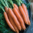 Carrot: Nelson image