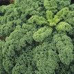 Kale: Winterbor image
