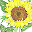 Sunflower: Tiffany image