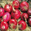 Onion: Red Burgundy image