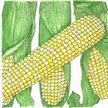 Corn: Double Standard image