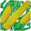 Corn: True Gold image