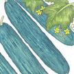 Cucumber: Muncher image