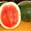Watermelon: Stone Mountain image