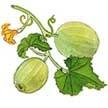 Cucumber: Lemon image