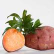 Sweet Potato: Bradshaw image