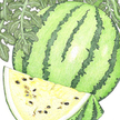 Watermelon: Early Moonbeam image