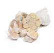 Garlic: California Early White image