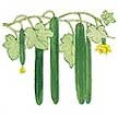 Cucumber: English Chelsea Prize image