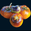 Tomato: Orange Fleshed Purple Smudge image