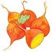 Beet & Beetroot: Gourmet Golden image