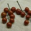 Tomato: Placero image
