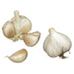 Garlic: Asian Tempest image