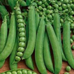 Peas: Alderman image
