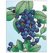 Blueberry: Jersey image