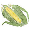 Corn: Casino image