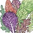 Lettuce: Gourmet Mix image
