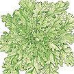 Lettuce: Green Salad Bowl image
