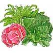 Salad Blends / Mesclun: Crispy Winter image