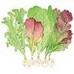Lettuce: Sweet Greens and Reds image