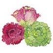 Lettuce: Summer Bouquet Blend image