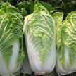 Cabbage: Wong Bok image