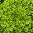 Lettuce: Salad Bowl image