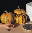 Pumpkin: Kakai pumpkin image